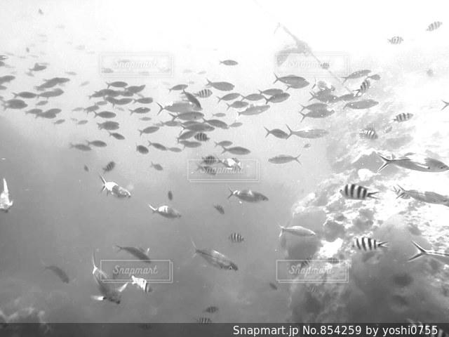 雨の中で飛んでいる鳥の群れの写真・画像素材[854259]