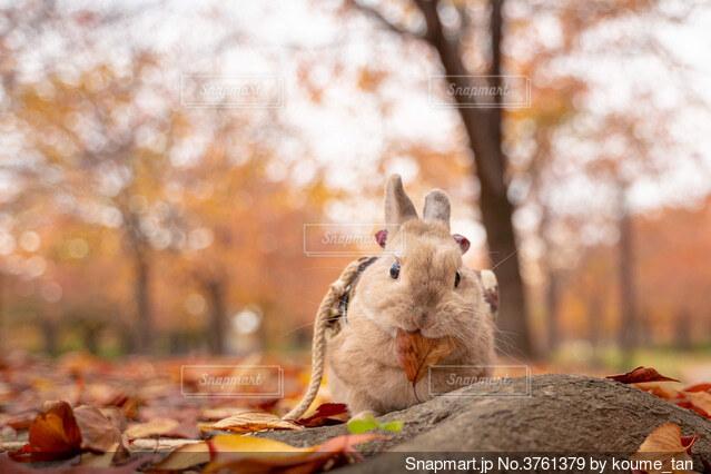 動物のクローズアップの写真・画像素材[3761379]