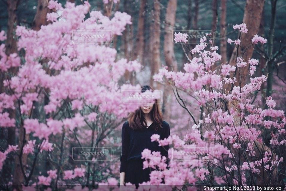 花の写真・画像素材[12213]
