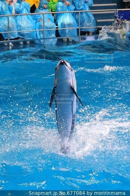 イルカの写真・画像素材[677084]