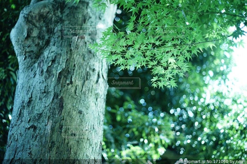 森林の写真・画像素材[171060]