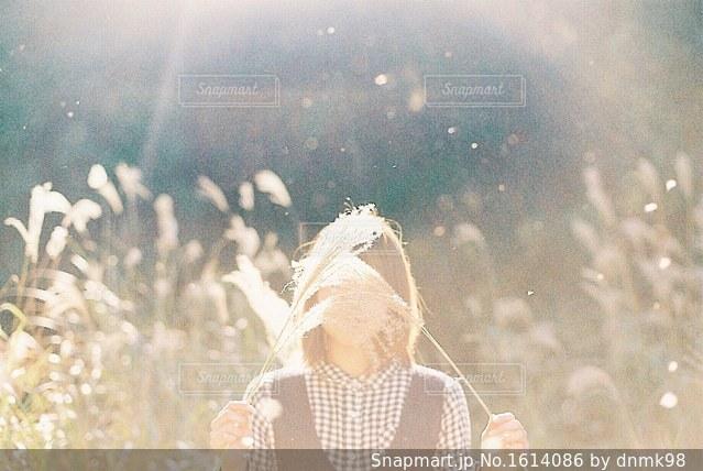 陽だまりの彼女の写真・画像素材[1614086]