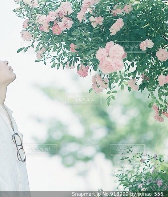 近くの花のアップの写真・画像素材[918909]