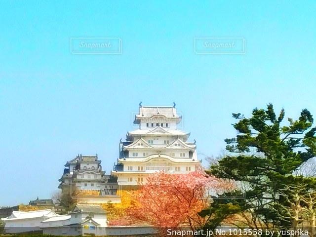 春の姫路城の写真・画像素材[1015558]