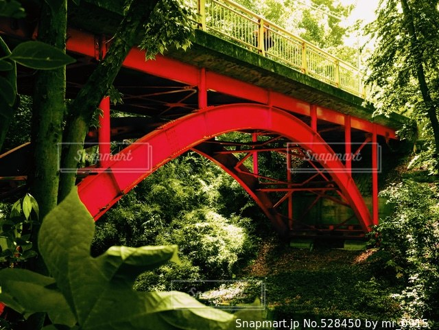 自然の写真・画像素材[528450]