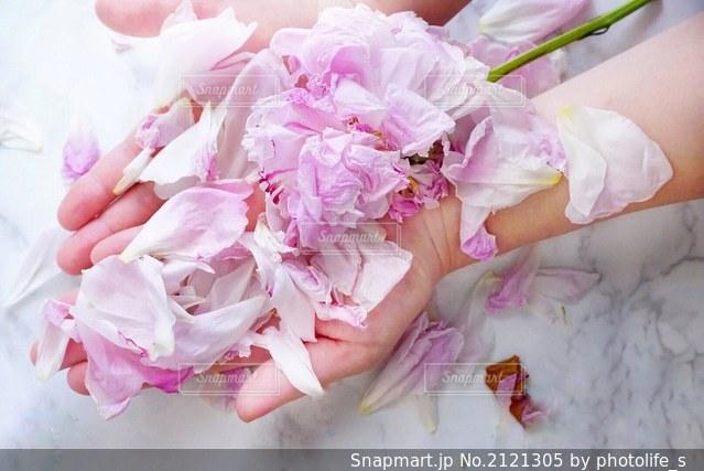 植物の上のピンクの花の写真・画像素材[2121305]