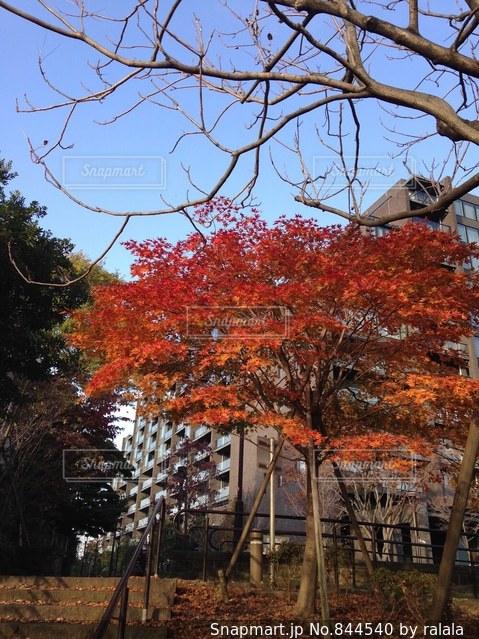 近くの木のアップの写真・画像素材[844540]