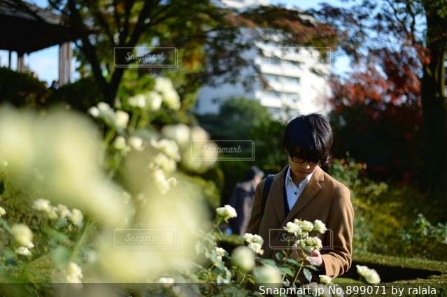 バラ園をお散歩の写真・画像素材[899071]