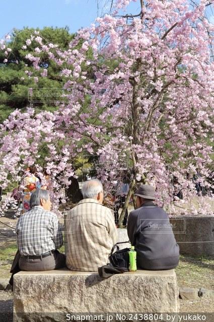 桜を見ている人々の写真・画像素材[2438804]