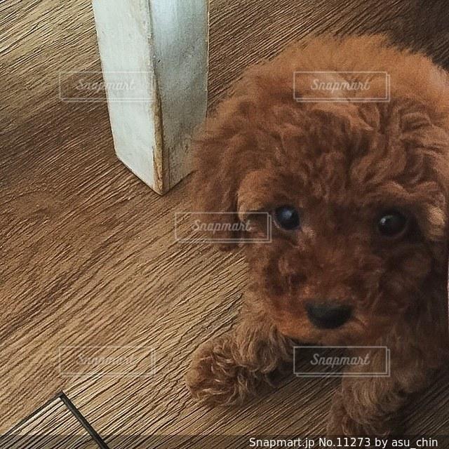 犬の写真・画像素材[11273]