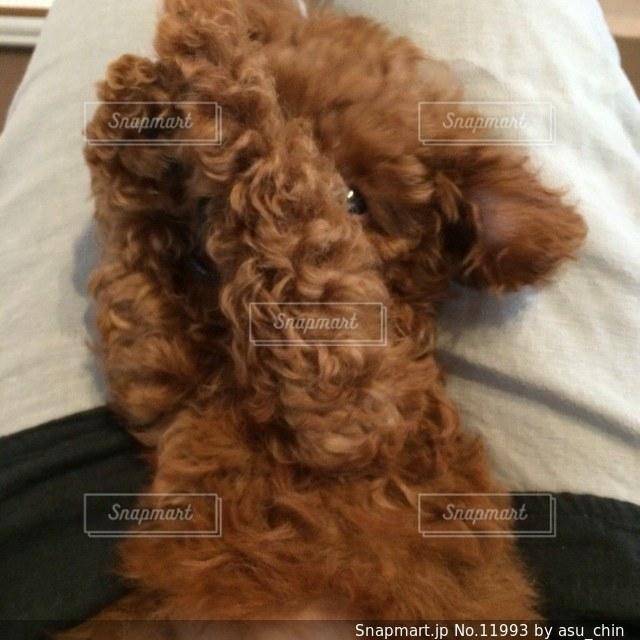 犬の写真・画像素材[11993]