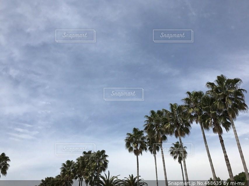 自然の写真・画像素材[468635]