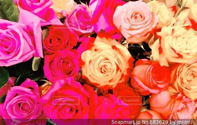 近くの花のアップ - No.883629