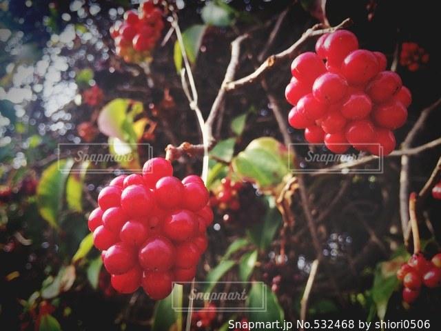 自然の写真・画像素材[532468]