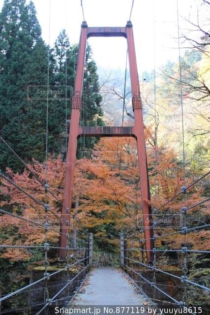 吊り橋の写真・画像素材[877119]