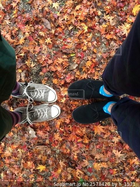 二人の足元は落ち葉の絨毯🍂の写真・画像素材[2578420]