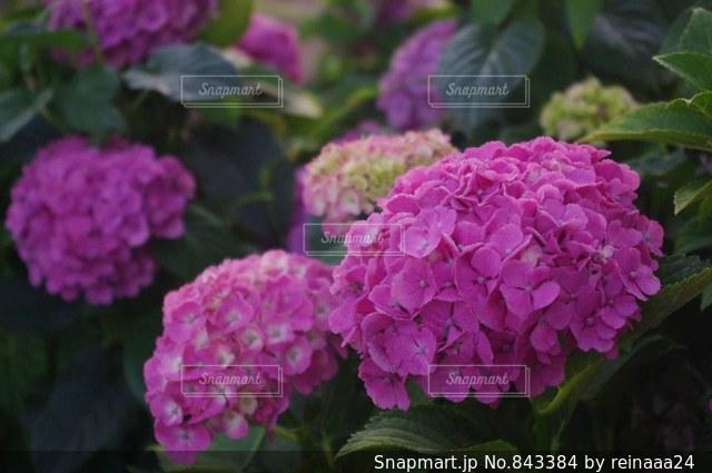近くの花のアップの写真・画像素材[843384]