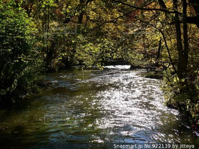 奥入瀬渓流の写真・画像素材[922139]