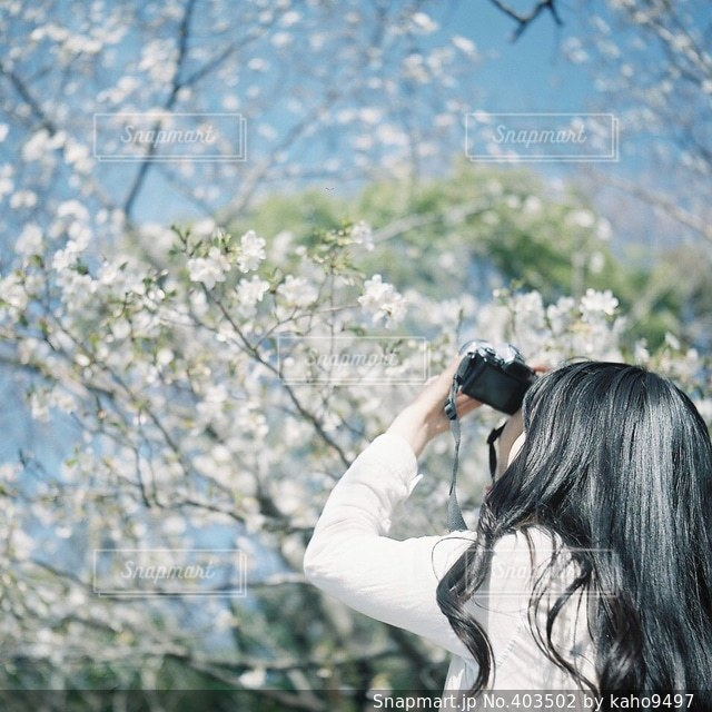 No.403502 春