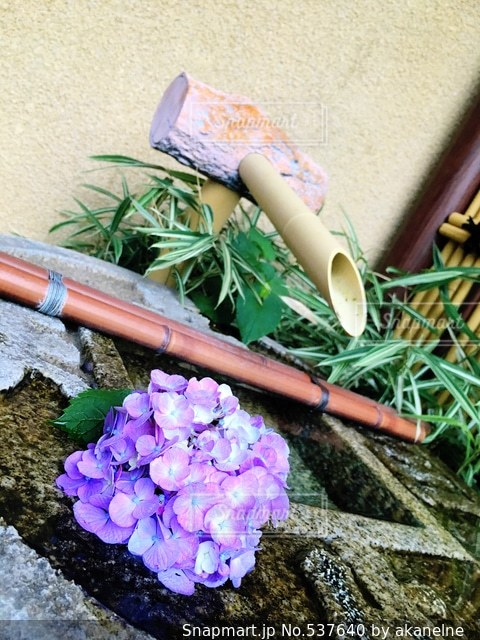 花の写真・画像素材[537640]