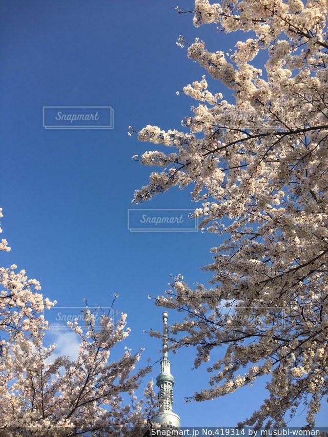 春の写真・画像素材[419314]