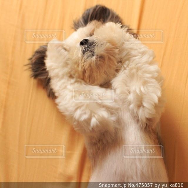 犬の写真・画像素材[475857]