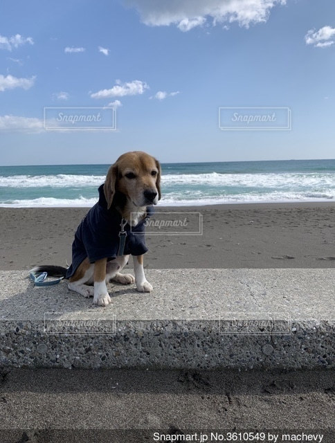 海と犬の写真・画像素材[3610549]