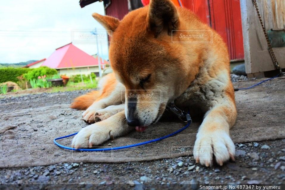 犬 - No.487347