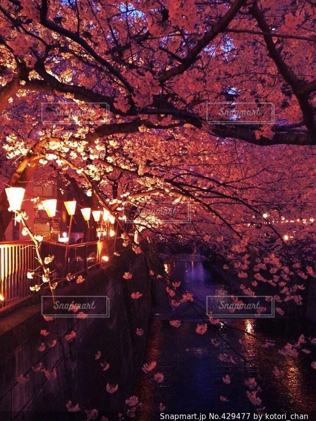 春の写真・画像素材[429477]
