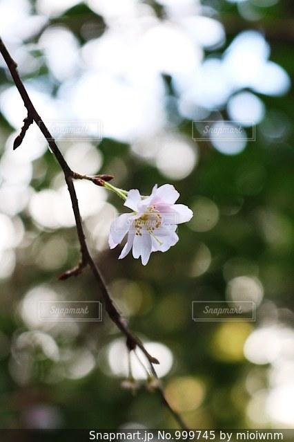 近くの花のアップの写真・画像素材[999745]