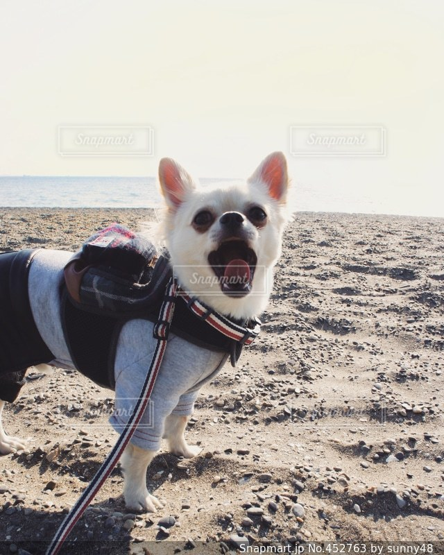犬の写真・画像素材[452763]