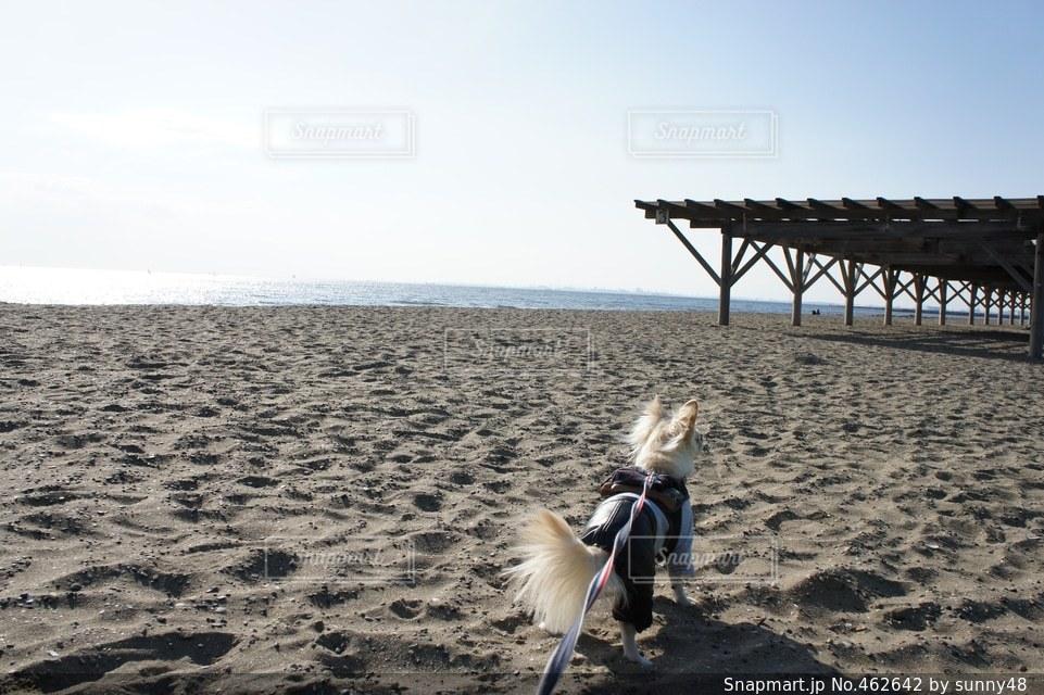 海の写真・画像素材[462642]