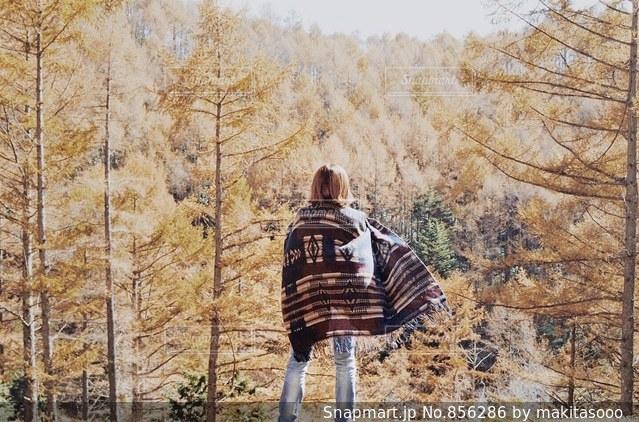 木の上に乗る男の写真・画像素材[856286]