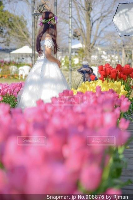 近くの花のアップの写真・画像素材[908876]