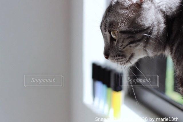 猫 - No.531838