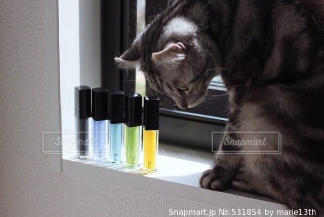 猫 - No.531854