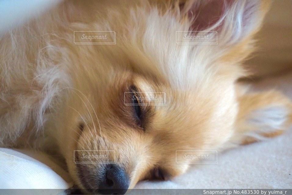 犬の写真・画像素材[483530]