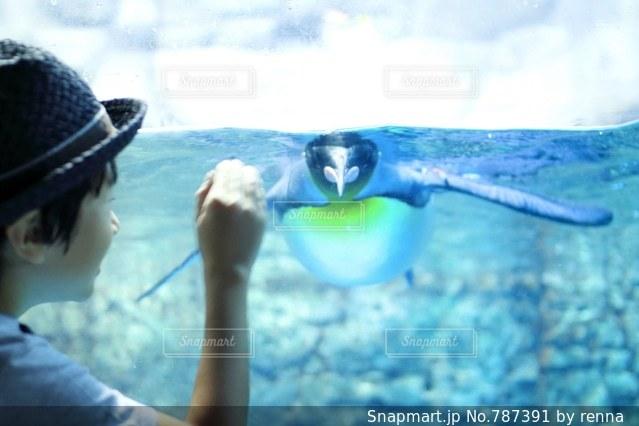 おいでおいでするとペンギンさんがくるよ - No.787391