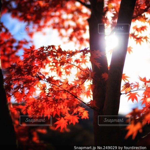 自然の写真・画像素材[249029]