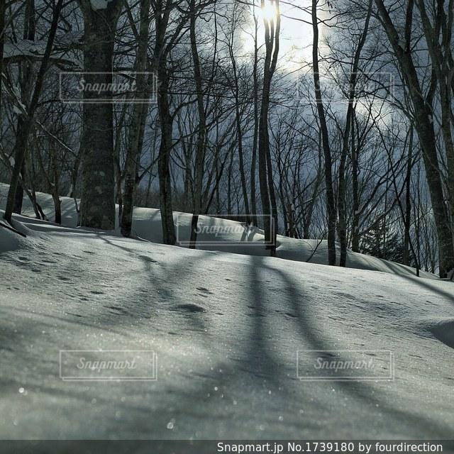 雪の煌きの写真・画像素材[1739180]