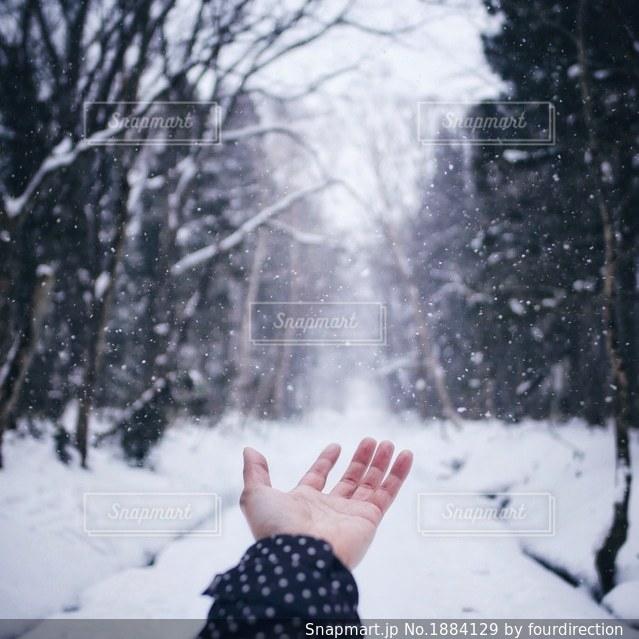 手の中に降る雪。の写真・画像素材[1884129]