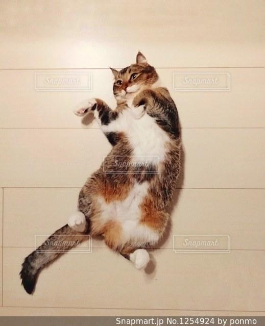 カウンターに座っている猫の写真・画像素材[1254924]