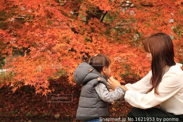 木の隣に立っている女性の写真・画像素材[1621953]