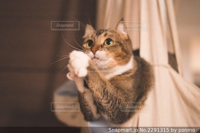 カメラを見ている猫の写真・画像素材[2291315]