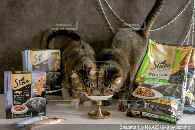 テーブルの上に座っている猫の写真・画像素材[4231948]