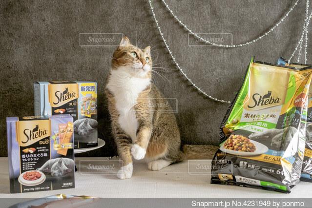 テーブルの上に座っている猫の写真・画像素材[4231949]