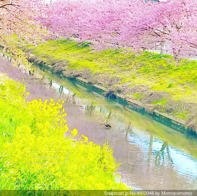 池のクローズアップの写真・画像素材[4302048]
