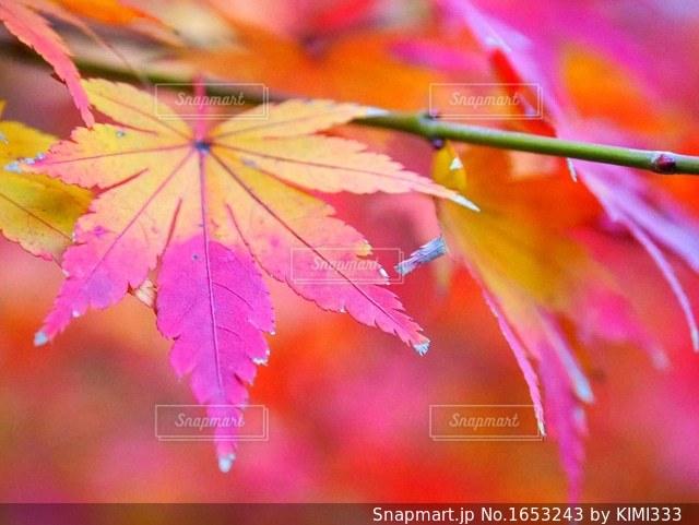 近くの木のアップの写真・画像素材[1653243]