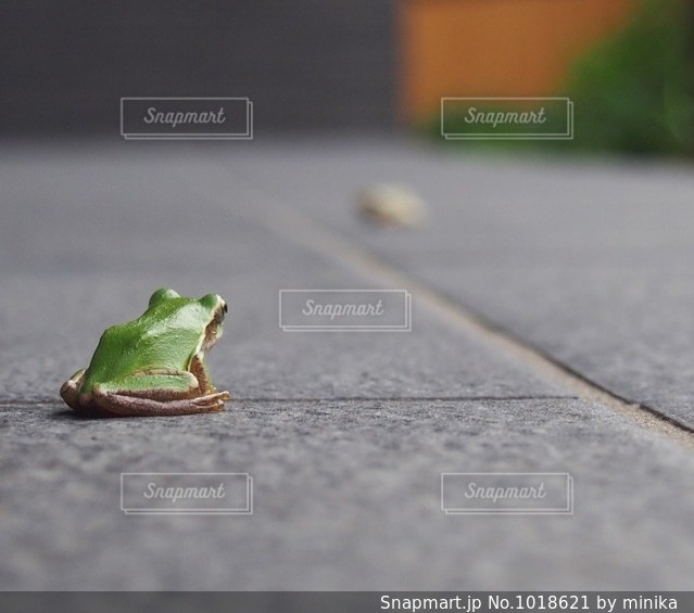 カエルの後ろ姿の写真・画像素材[1018621]