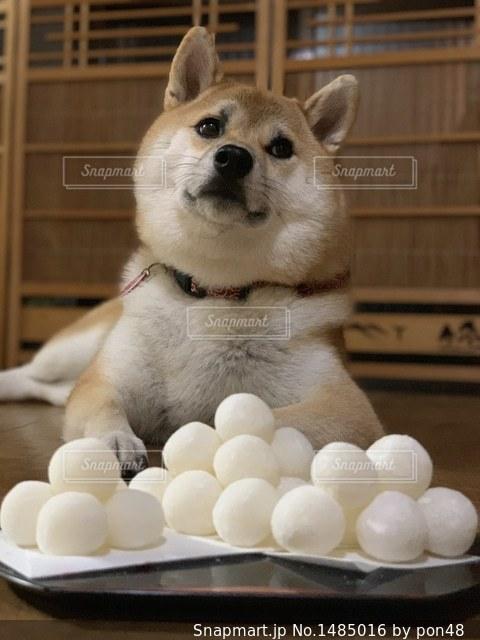 愛犬とお月見の写真・画像素材[1485016]